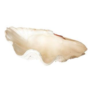 Natural Clam Shell Bowl