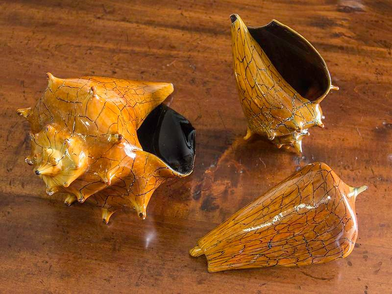 amazing silkwood glass #4: Hand Blown Art Glass Conch Shell, Silkwood Glass - Image 6 of 7