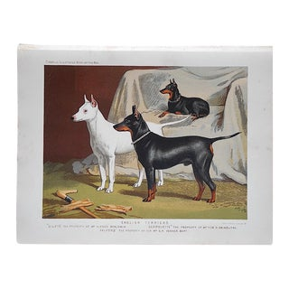 Antique English Terriers Dog Lithograph