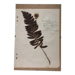 Vintage Christmas Fern Botanical Journal Page