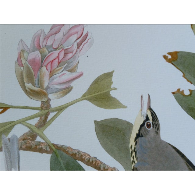 Audubon Bird Prints - Image 5 of 5