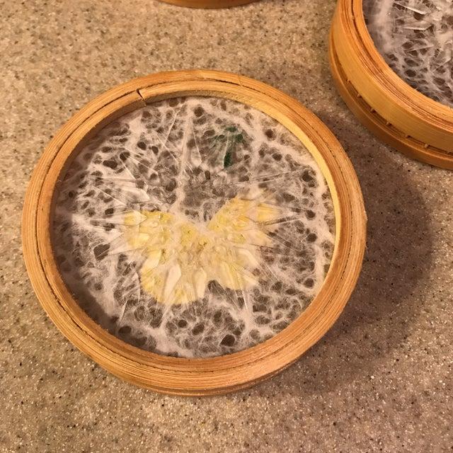 Butterfly Specimen Tray & Coaster Set - Image 7 of 11