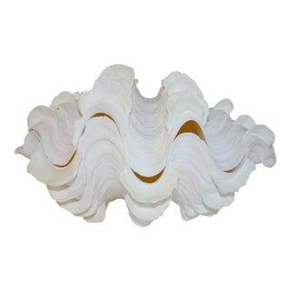 Ruffled Clam Shell Specimen
