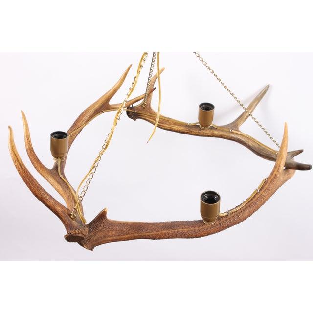 Swedish Deer Antler Chandelier - Image 4 of 5