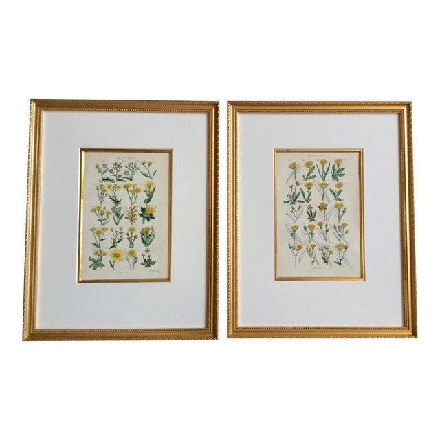 Botanical Prints C-1859 - A Pair - Image 1 of 9