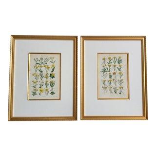 Set of 2 Botanical Prints C-1859