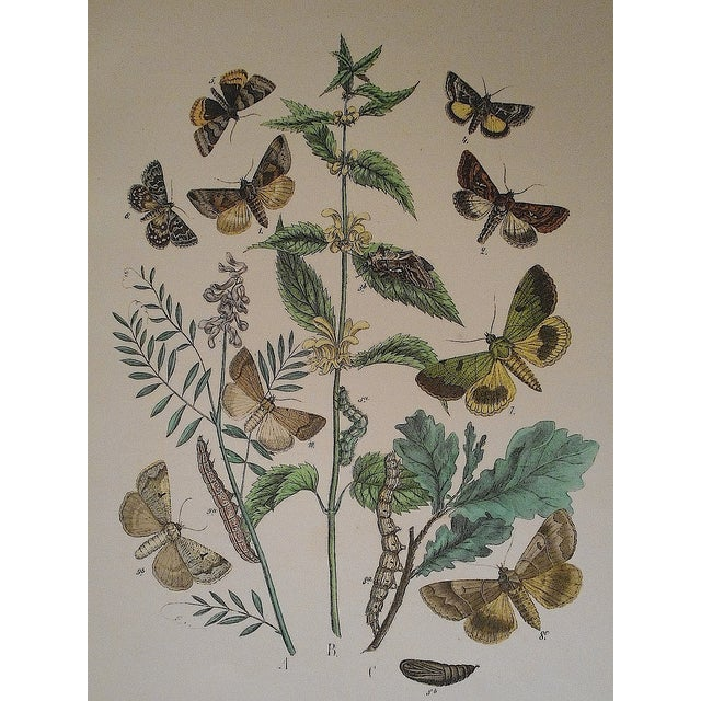 Antique Chromolithograph Butterflies/Moths - Image 1 of 2