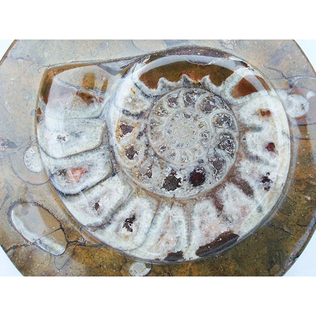Image of Ammonite and Orthocerus Carved Box