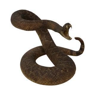 Vintage Eastern Diamond Back Stuffed Rattlesnake