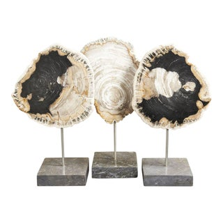 Petrified Wood on Stand - Set of 3