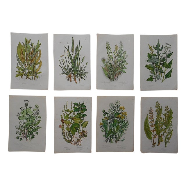 Antique Botanical Lithographs - Set of 8 - Image 1 of 3