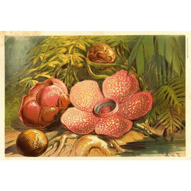 Antique Botanical, 1866 - Image 1 of 3
