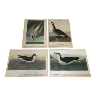 Audubon Shore Bird Vintage Lithographs - Set of 4