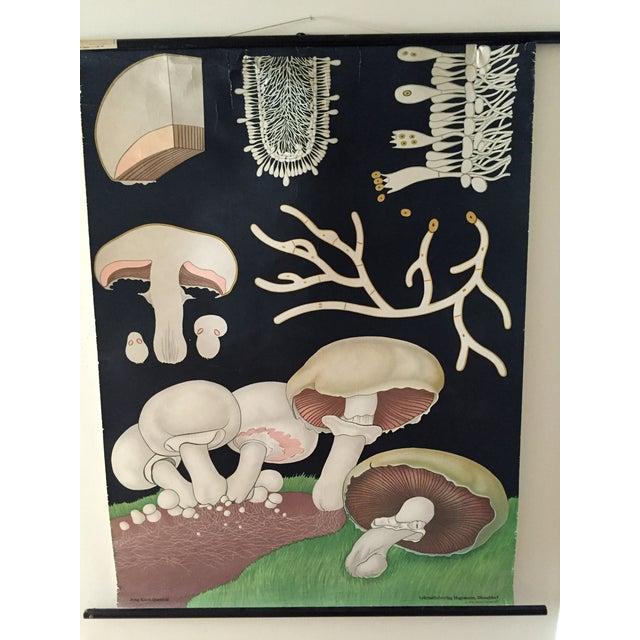 1973 Jung-Koch-Quentell Mushroom School Wall Chart - Image 2 of 8