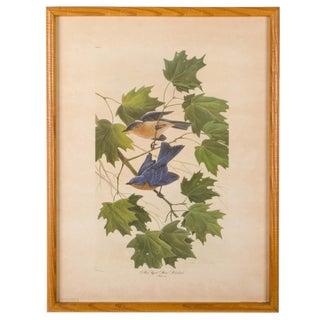 John Ruthven New York State Bluebird Print