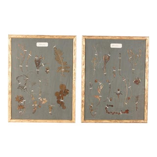 Pair of French Gilded Frames with Botanical Herbaria, 1930s