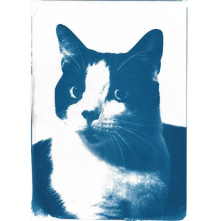 Cyanotype Print- Cat Portait