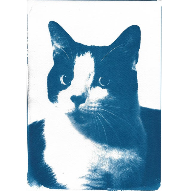 Image of Cyanotype Print- Cat Portait
