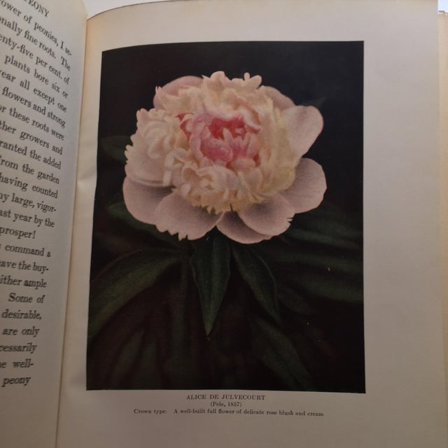 """The Book of the Peony"" by Harding, 1917 - Image 11 of 11"