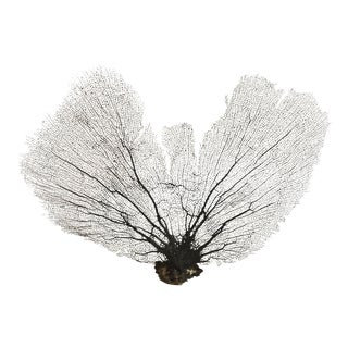 Natural Sea Fan Mounted on Lucite