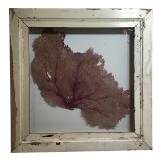 Natural Sea Fan Coral