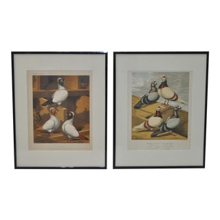 C. 1890 Cassell's PIgeon Book Pigeon Prints - A Pair