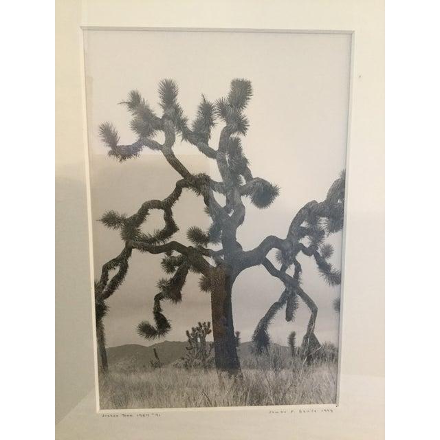 "Image of ""Joshua Tree"" #91 Photograph, 1984"