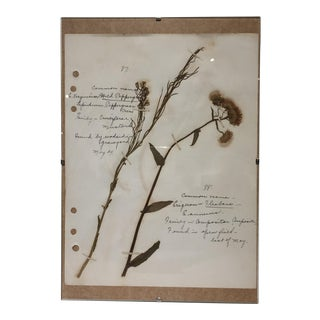 Vintage Wild Peppergrass Botanical Journal Page