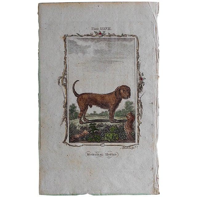 Antique English Dog Engraving - Image 1 of 3