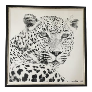 Black and White Cheetah Photograph
