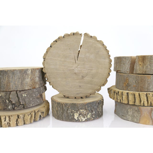 9 oval cut live edge wood cross section log slices chairish for How to cut wood slices