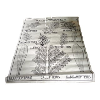 French 1950 Flora Science Chart