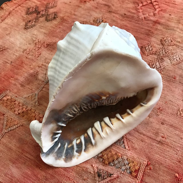 Queen Helmet Conch Seashell - Image 7 of 9