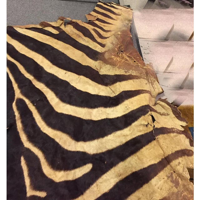 Vintage Brown Zebra Hide Rug - Image 4 of 5