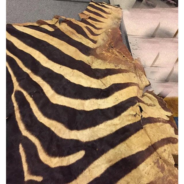 Image of Vintage Brown Zebra Hide Rug