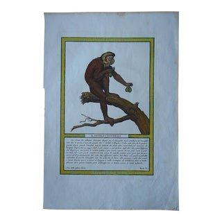 Antique Copperplate Engraving-Monkey-Italy c.1812
