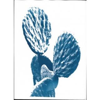 Cyanotype Print, Succulent Cactus