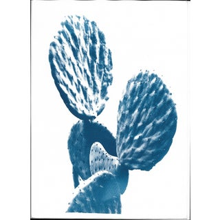 Original Cyanotype Print Totally Handmade From A, Succulent Cactus (Limited Edition)