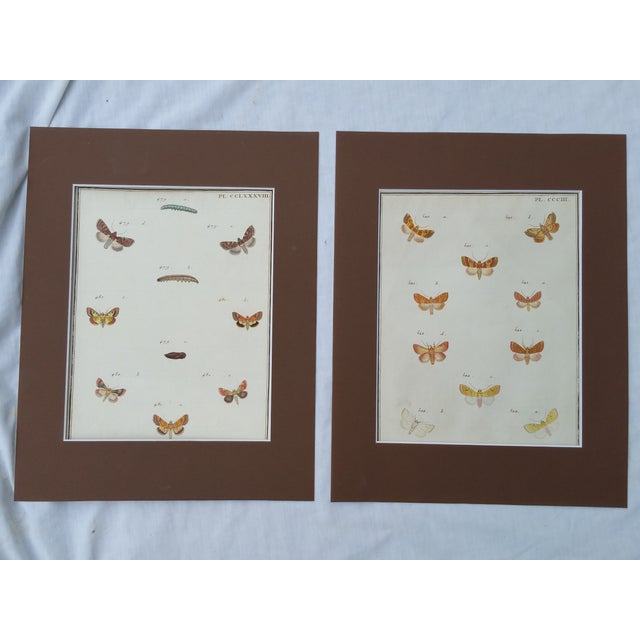 19th-Century French Butterfly Prints - A Pair - Image 2 of 4