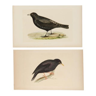 Antique Hand-Colored Aviary Wood Engravings - A Pair