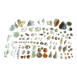 Assorted Shell Collection - 100 Pieces