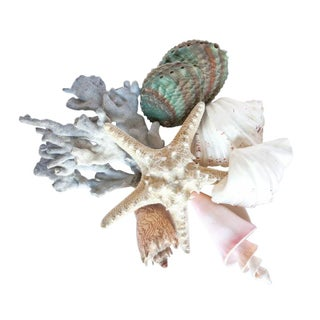Collection of Decorative Sea Shells