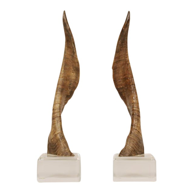 Image of African Horns on Lucite Bases after Karl Springer - a Pair