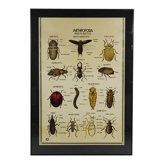 1920s Arthropoda Insect & Beetles Poster