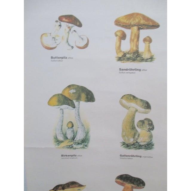 Antique German School Chart of Mushrooms - Image 4 of 9