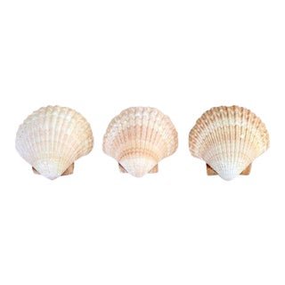 Mexican Cup Shells - Set of 3