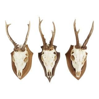 Vintage German Roe Deer Antlers - Set of 3