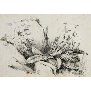 Circa 1900 Nature Study Lithograph