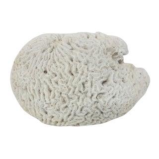 Large Natural Brain Form Coral Specimen