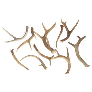 Natural Deer Antlers - Set of 10